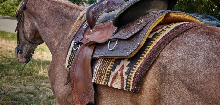 How To Size A Western Saddle For Your Horse